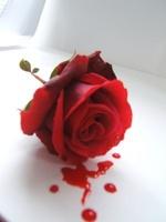 bloodyrose.jpg