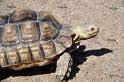 turtlewalk.jpg